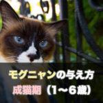 【保存版】1~6歳の成猫期の猫ちゃんへモグニャンを与える際の注意点