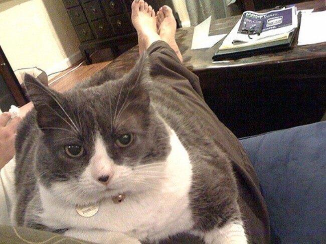 こんな猫は注意しよう!尿路結石になりやすい猫の4つの特徴&適切な対策