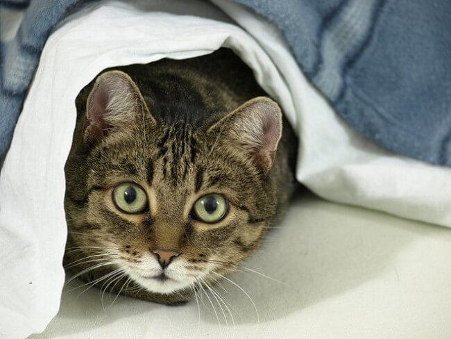 成猫期の猫ちゃんへモグニャンを与える際の注意点