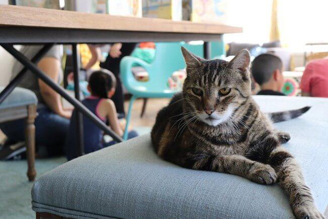 シニア猫にモグニャンを与えるメリットと期待できる効果とは?