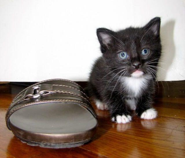 月齢1~3ヶ月の子猫にはモグニャンをふやかして与えよう