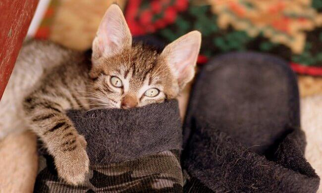 今回の検証と口コミから見える、モグニャンをオススメしたい猫ちゃん・飼い主さん