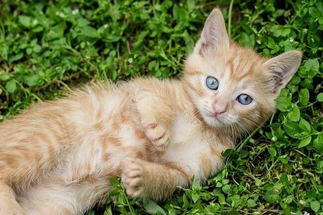 そもそも猫にとって健康的な食事とは?キャットフード選びで重要な3つのポイント